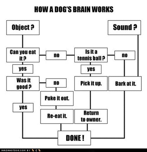 boxer,brain,derp,flow chart,how-a-dogs-brain-works,The More You Know,whoa