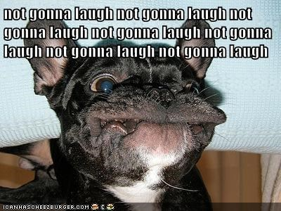 french bulldogs,funny,giggle,laugh,not gonna laugh