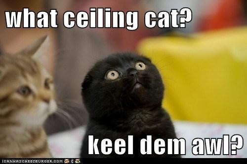 animals,cat,ceiling cat,I Can Has Cheezburger,kill them all