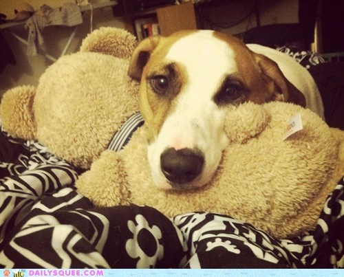 beagle bed bedtime dogs mix pitbull puppy reader squees ready teddy bear