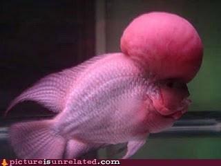 fish forehead weirdest wtf - 5720129280