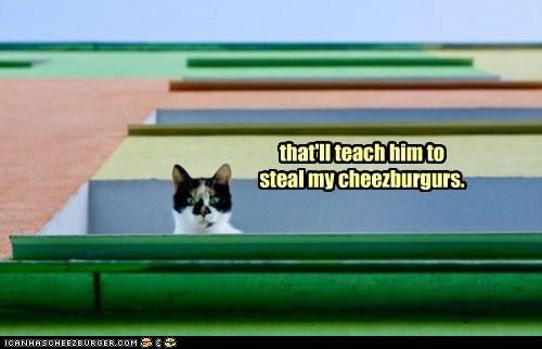 Cheezburger Image 5720291072