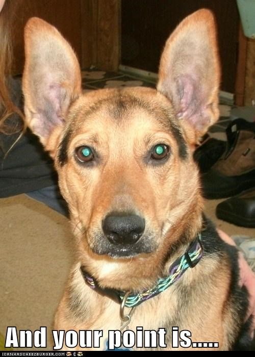 big ears ears german shepher i-dont-get-it whats-your-point - 5720532992