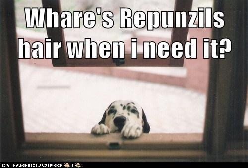 dalmatian open window puppy rapunzel window - 5720697600