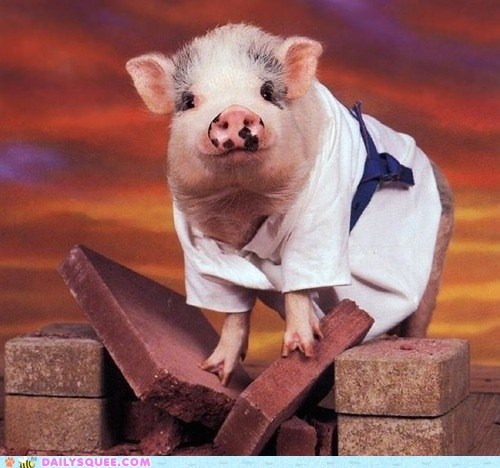 acting like animals,breaking,brick,gi,Hall of Fame,karate,martial arts,pig,piglet