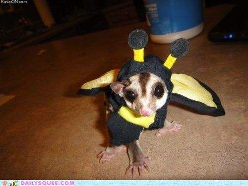 acting like animals bee costume dream dreaming dressed up Hall of Fame pretending sugar glider