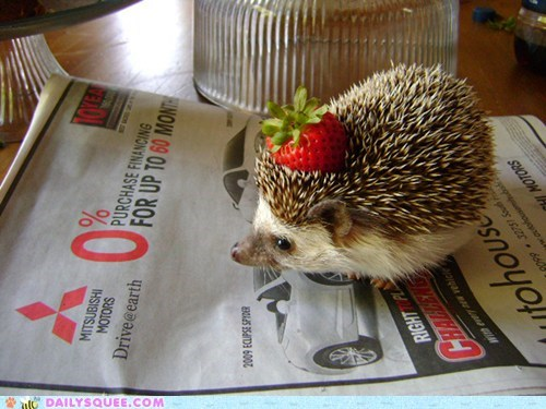 adorable,baby,costume,fruit,Hall of Fame,hat,hedgehog,strawberry,tiny,wearing