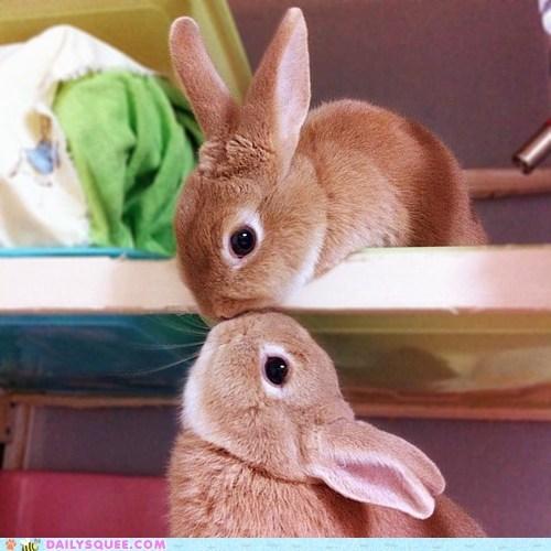 acting like animals bunnies bunny Hall of Fame happy bunday kissing rabbit rabbits scene - 5720991488