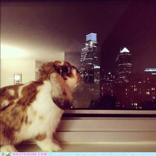 bunny cityscape gazing happy bunday night rabbit skyline Staring window - 5721002240