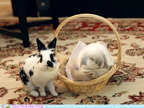 Cute picture of an adorable rabbit that is in a basket and another too, just to show there are plenty to go around.