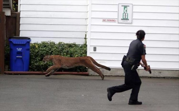 pics of animals in funny places that you would not expect