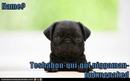 Cheezburger Image 5721618688
