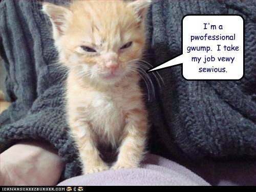caption,captioned,cat,grump,grumpy,job,kitten,professional,serious,seriously,tabby