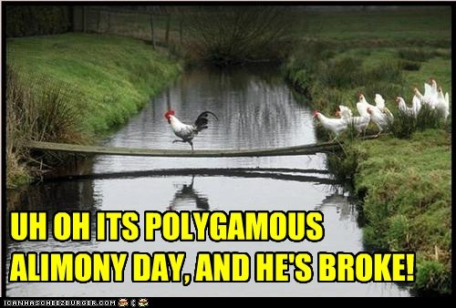 alimony,animals,birds,broke,chickens,polygamy,poor,rooster