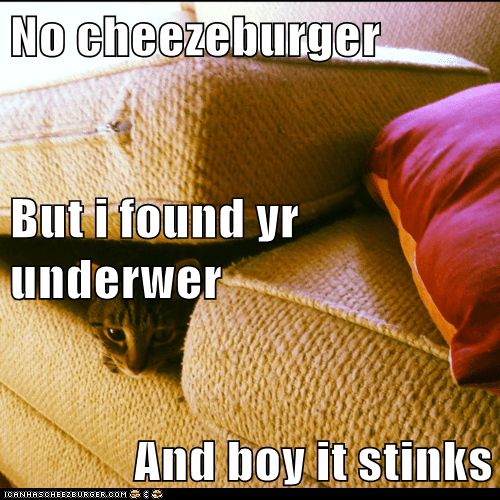 Cheezburger Image 5722203648