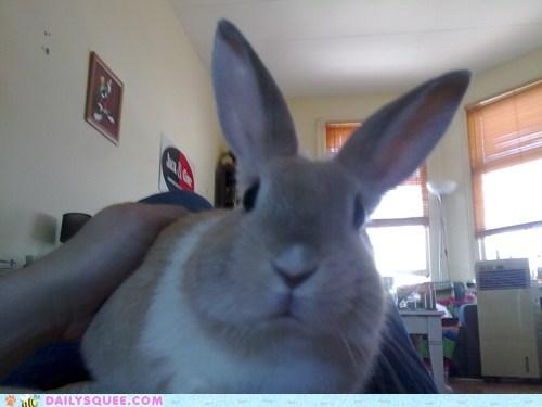 bunny freddie mercury happy bunday namesake rabbit reader squees - 5722468096