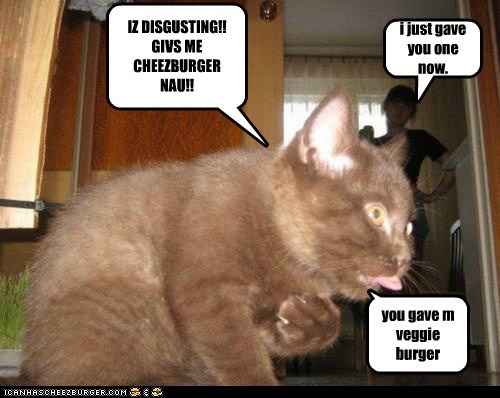 Cheezburger Image 5722501632