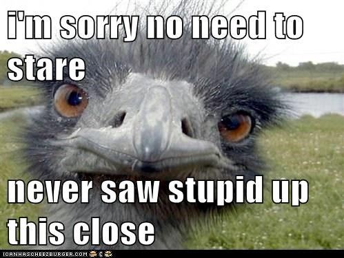 animals,birds,emu,honest,honesty is the best policy,stupid,youre-stupid