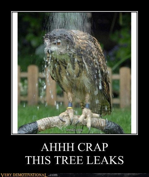 wtf leaking birds funny - 5724796928