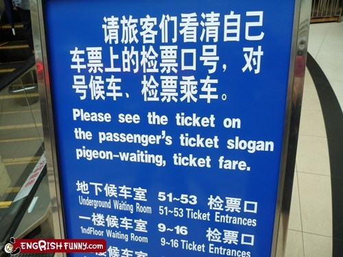 birds,lost in translation,mistranslated,pigeons