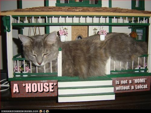 A *HOUSE* is not a *HOME* wittout a Lolcat