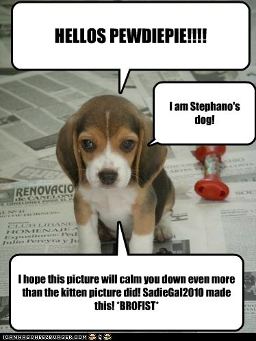HELLOS PEWDIEPIE!!!! I am Stephano's dog! I hope this picture will calm you down even more than the kitten picture did! SadieGal2010 made this! *BROFIST*