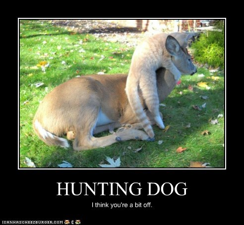 HUNTING DOG I think you're a bit off.