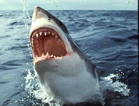 surfer white supremacists sharks birth kkk - 572677