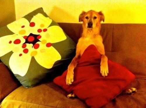 doggeh Sundog - 5727600896