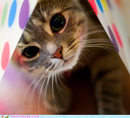 cat caught Hall of Fame kitten looking peek peekaboo peeking reader squees - 5727790336