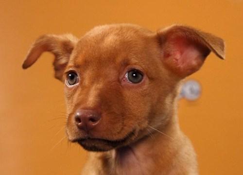 doggeh Puppy Bowl super bowl Super Puppies - 5728087040