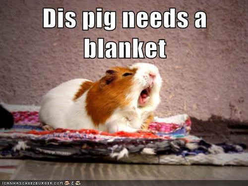 adorable animals blanket cold guinea pig - 5728241920