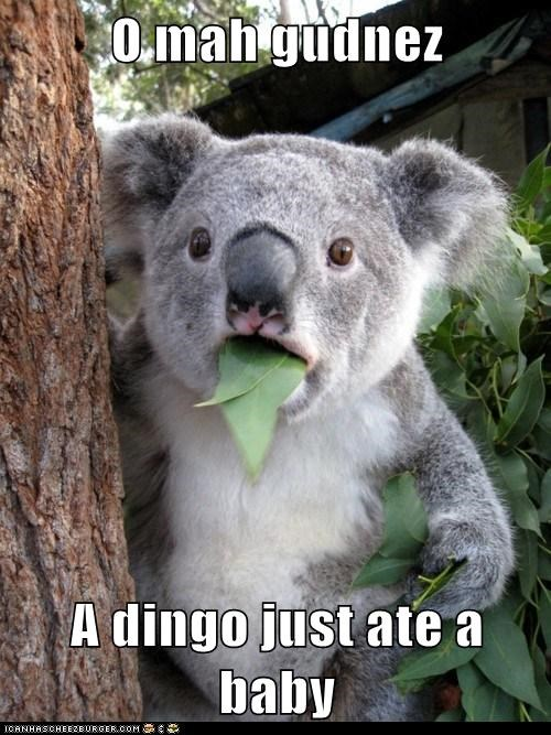 animals hungry koala koala bear shocked whoa - 5728345856