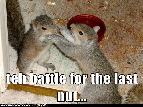animals argument Battle eating fight food nut nuts squirrel squirrels - 5728390656