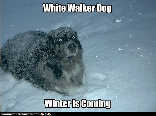White Walker Dog Winter Is Coming