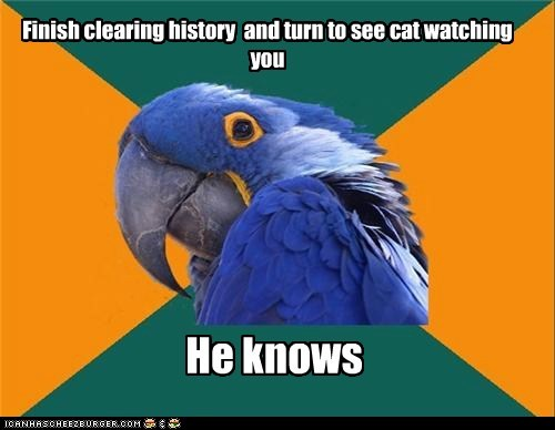 birds,browser history,Cats,creepy,internet,knowing,Paranoid Parrot,parrots,pr0n,self love,watching
