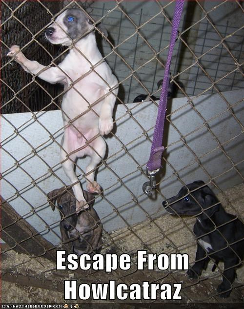 alcatraz escape escape from Howlcatraz fence jail puppies puppy - 5730650624