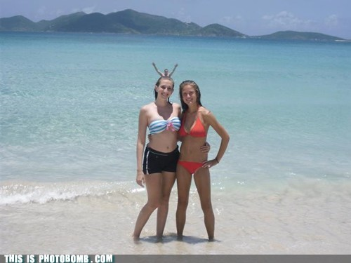 awesome,beach,bikini,bunny ears,girls