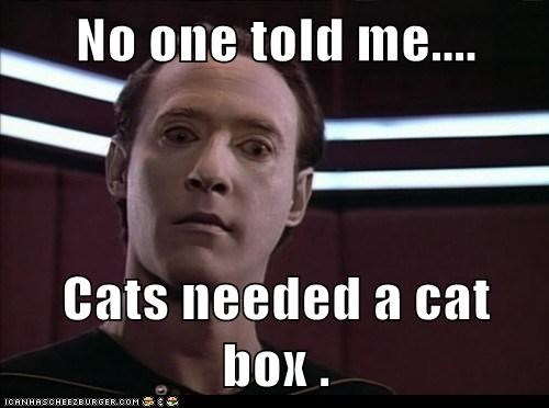 brent spiner,cat box,Cats,data,no one,Star Trek