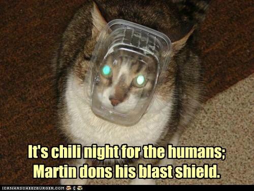 caption captioned cat chili humans night prepare shield - 5731724800
