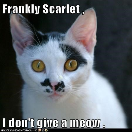 caption captioned cat dont frankly give gone with the wind meow Movie mustache quote