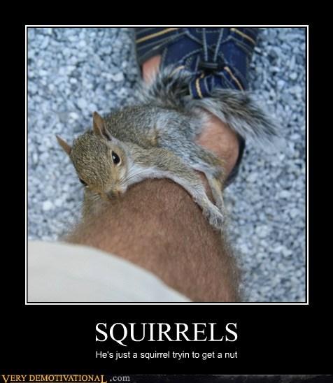 hilarious leg nut squirrel wtf - 5731868160