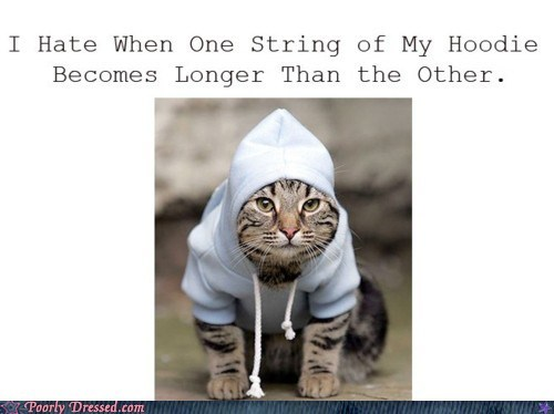 cat in hoodie,Hall of Fame,hoodie problems,hoodie strings
