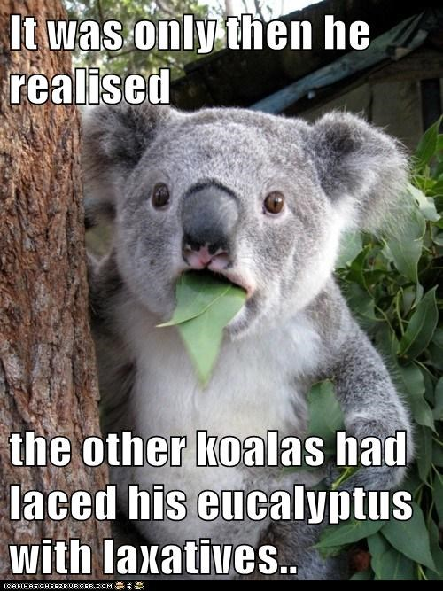 It was only then he realised  the other koalas had laced his eucalyptus with laxatives..