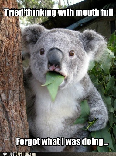 caption contest,eat,eating,food,forgot,holy hell,koala,koala bear,noms
