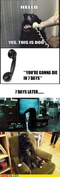 7 days best of week meme Memes sadako the internets the ring this is dog - 5733411328