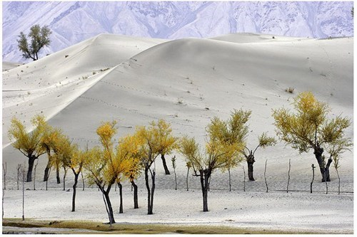 asia,calm,desert,getaways,Pakistan,serene,trees