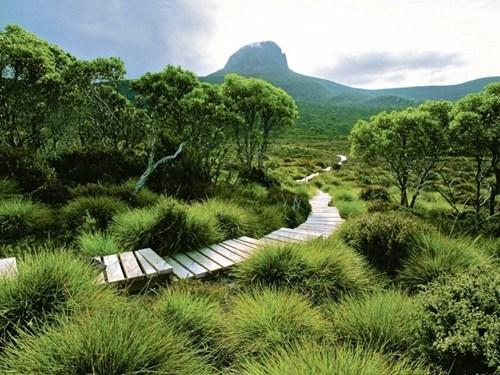 australia awesome Forest getaways green nature path pathway tasmania - 5733457408