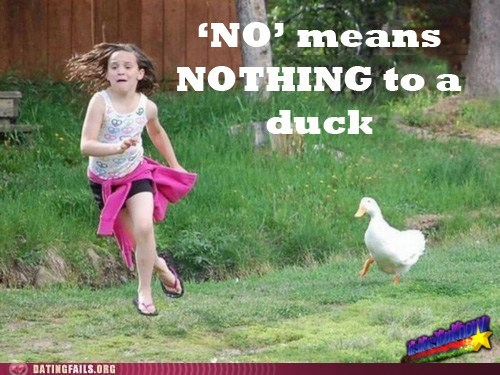 ducks,no means no,The More You Know