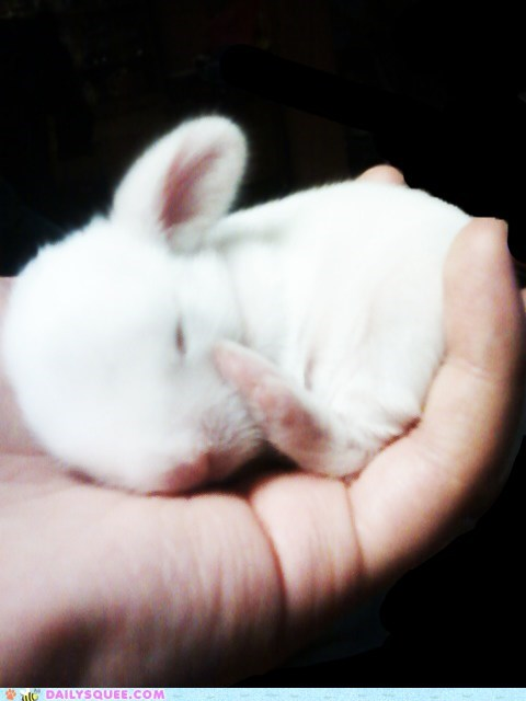 baby,bunny,hand,handheld,happy bunday,holding,palm,rabbit,reader squees,sleeping,tiny